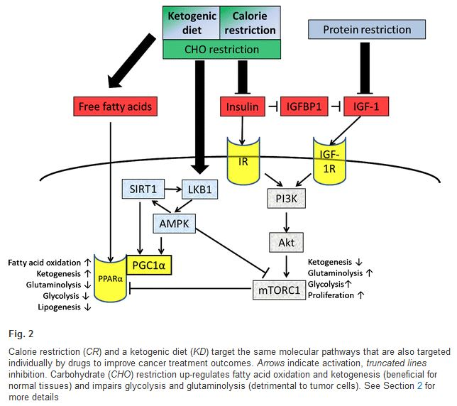 cr-kd-metabolic-pathways