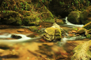 meditation-pond
