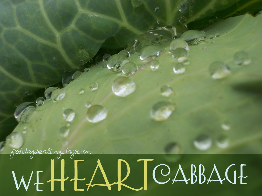 we-heart-cabbage
